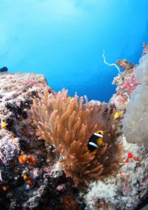 Diving in Amed Bali | Alpha World Diving