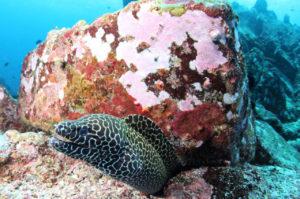 Moray Eel | Diving in Bali Sanur | Alpha World Diving