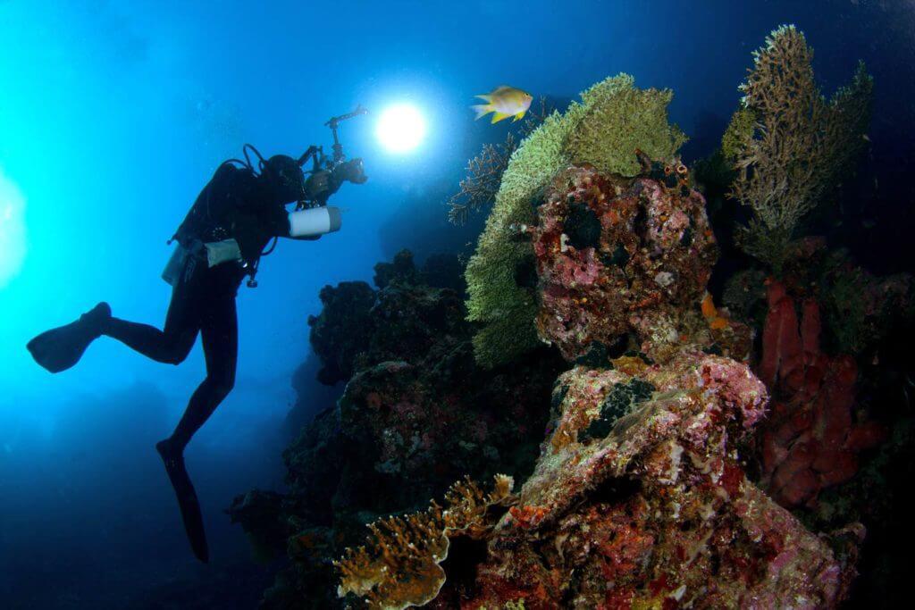Menjangan as one of best Scuba Diving Spot in Bali | Alpha World Diving