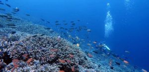 Diving near Nusa Penida Bali | Alpha World Diving