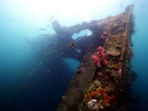 Tulamben Wreck Diving | Tulamben Dive Sites | Alpha World Diving