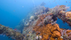 Tulamben Diving Package | Explore Bali | Alpha World Diving