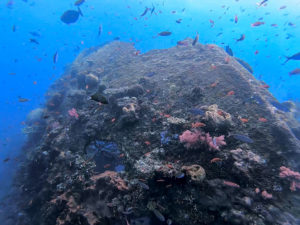 Tulamben Dive Site | Diving Package in Bali | Alpha World Diving