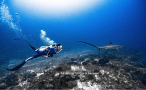 Diving in Derawan Indonesia | Diving Trip Package | Alpha World Diving