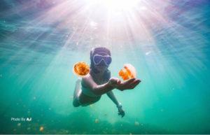 jellyfish in Derawan Kalimantan   Indonesia Diving Trip Package   Alpha World Diving