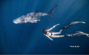 Whaleshark | derawan snorkeling and diving | Alpha World Diving