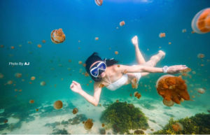 diving derawan island, Kalimantan, Indonesia | Alpha World Diving