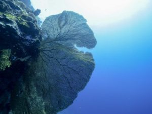 Menjangan Island Diving and Snorkeling Tour | Alpha World Diving