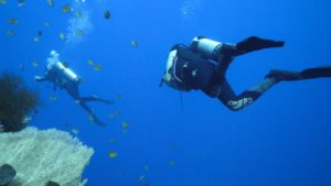 Diver in Menjangan Island | Alpha World Diving