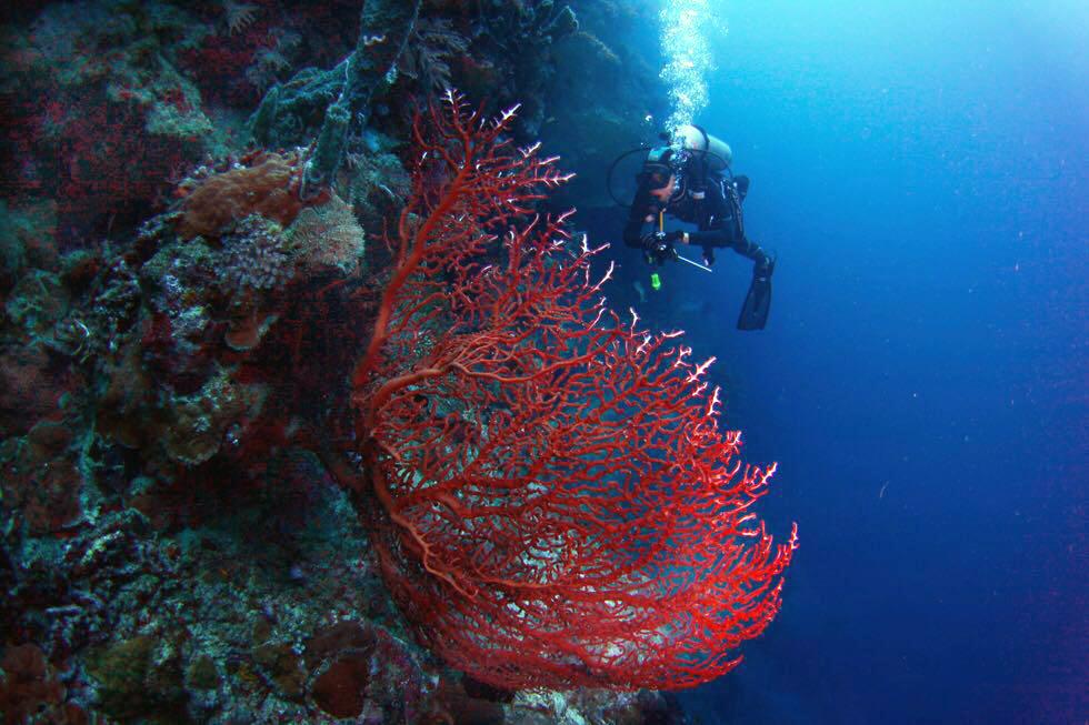 PADI Certification & Courses Bali | Alpha World Diving