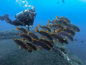 PADI Certification Bali - PADI Divemaster in Bali - Alpha World Diving